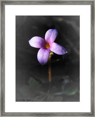 Bluet Framed Print by Matt Taylor