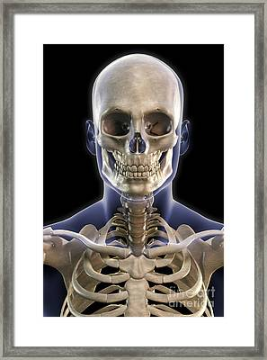 Bones Of The Head And Upper Thorax Framed Print by Science Picture Co