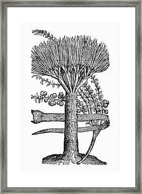 Botany Dragon Tree Framed Print by Granger