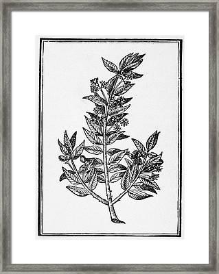 Botany Tree Of Sorrow Framed Print by Granger