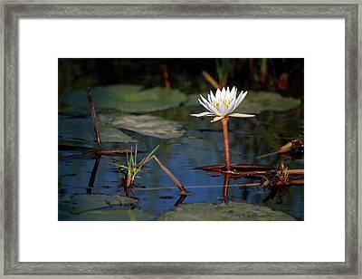 Botswana, Okavango Delta Framed Print by Kymri Wilt