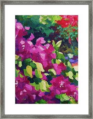 Bougainvillea  Framed Print by John Clark