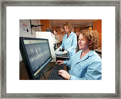 Bovine Disease Genetics Research Framed Print by Stephen Ausmus/us Department Of Agriculture
