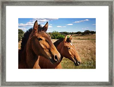Eat Free Framed Print featuring the photograph Breed Of Horses by Carlos Caetano