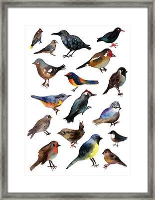 British Birds Framed Print by Lydia Irving