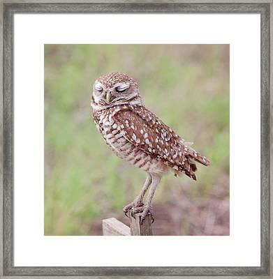 Burrowing Owl  Framed Print by Kim Hojnacki
