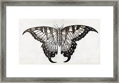 Butterfly, 17th Century Artwork Framed Print by Middle Temple Library