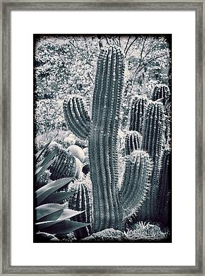 Cactus Land Framed Print by Kelley King