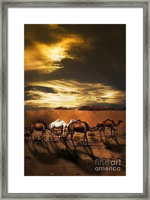 Camels Framed Print by Jelena Jovanovic