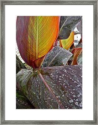 Canna Lily I  Framed Print by Kirsten Giving