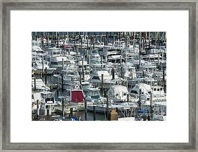 Cape May Marina Framed Print by John Greim