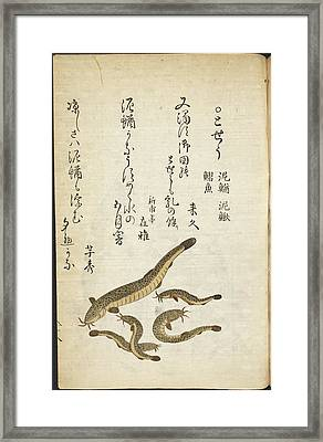 Catfish Framed Print by British Library