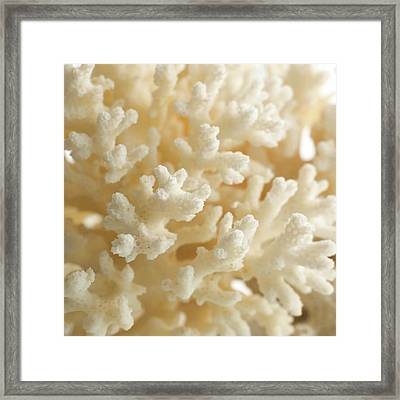 Cauliflower Coral Framed Print by Science Photo Library