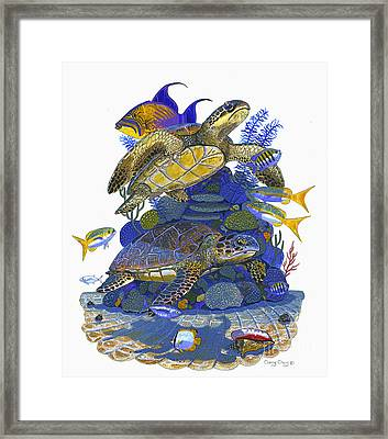 Cayman Turtles Framed Print by Carey Chen