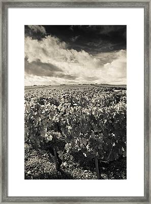 Chateau Lafite Rothschild Vineyards Framed Print by Panoramic Images