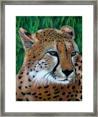 Cheetah Framed Print by Carol McCarty