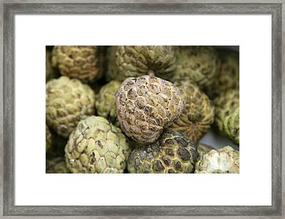 Cherimoya Fruit Annona Cherimola Framed Print by Bjorn Svensson