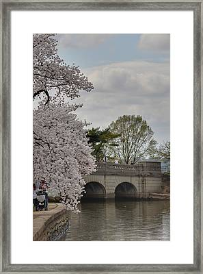 Cherry Blossoms - Washington Dc - 011328 Framed Print by DC Photographer