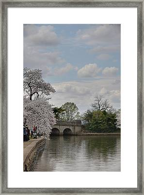 Cherry Blossoms - Washington Dc - 011329 Framed Print by DC Photographer
