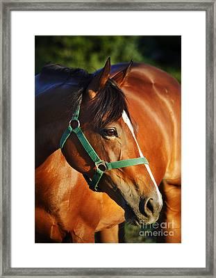 Chestnut Horse Framed Print by Jelena Jovanovic