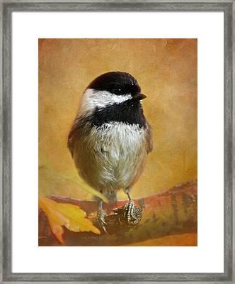 Chickadee Framed Print by Angie Vogel