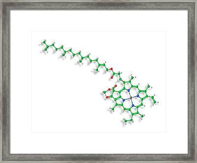 Chlorophyll A Molecule Framed Print by Carlos Clarivan