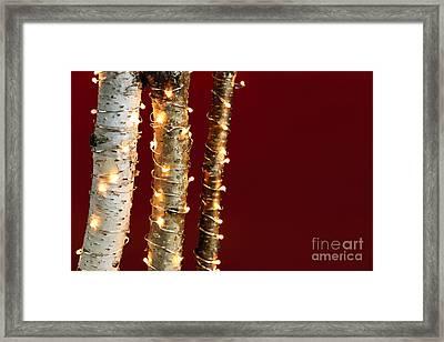 Christmas Lights On Birch Branches Framed Print by Elena Elisseeva