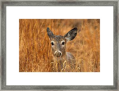 Close Encounter Framed Print by James Marvin Phelps