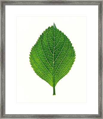 Close Up Of Green Leaf On Light Grey Framed Print by Panoramic Images