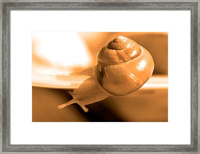 Closeup Of Snail Framed Print by Toppart Sweden