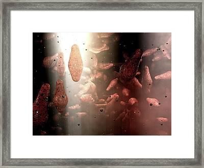 Clostridium Bacteria Framed Print by Hipersynteza