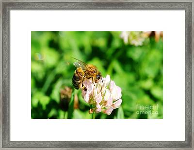 Clover Bee Framed Print by Jorgo Photography - Wall Art Gallery