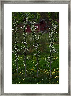 Blossoms At Cold Spring Orchard Framed Print by Mike Martin