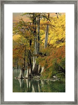 Colorful Cypress Framed Print by Robert Anschutz