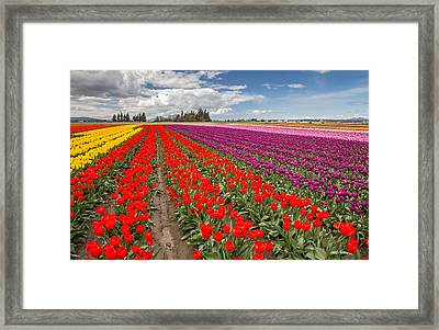 Colorful Field Of Tulips Framed Print by Pierre Leclerc Photography