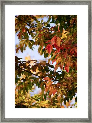 Colorful Leaves Framed Print by Gloria Pasko