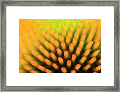 Coneflower Abstract Framed Print by Nigel Downer