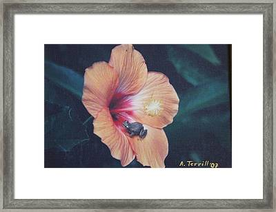 Coqui Framed Print by Alice Terrill