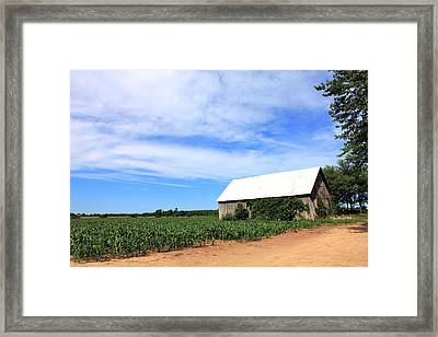 Corn Rows Framed Print by Sheryl Burns