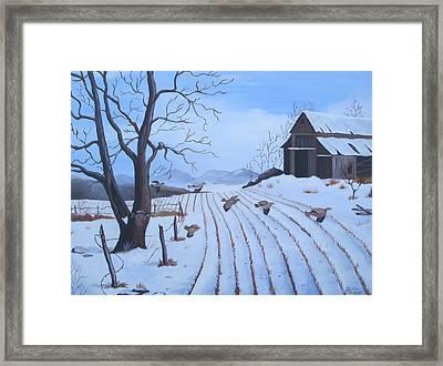 Cornfield Framed Print by Glenda Barrett