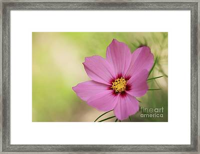 Cosmos... Framed Print by LHJB Photography