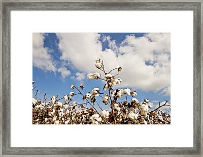 Cotton In The Sky Framed Print by Scott Pellegrin