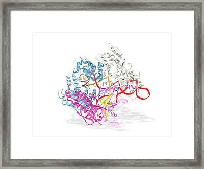 Crispr-cas9 Gene Editing Complex Framed Print by Ramon Andrade 3dciencia