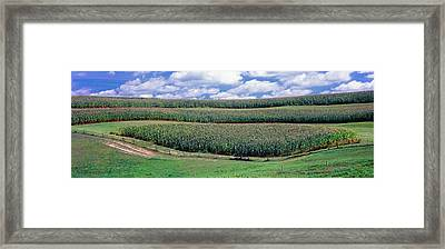 Crop In A Field, Amish Country, Holmes Framed Print by Panoramic Images