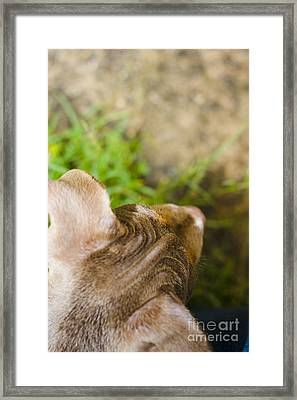 Curious Puppy Dog Exploring Outdoors Framed Print by Jorgo Photography - Wall Art Gallery