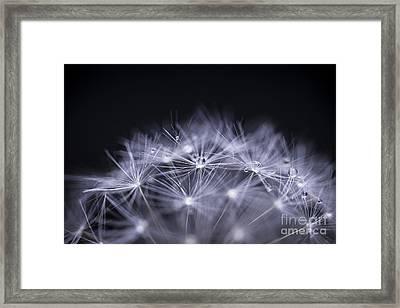 Dandelion Seeds Macro Framed Print by Elena Elisseeva