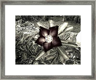 Dark Framed Print by Chasity Johnson