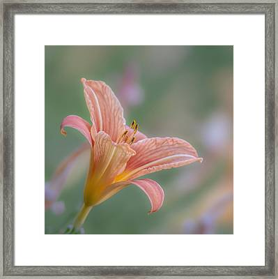 Day Lily Framed Print by Angie Vogel