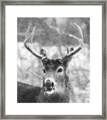 Deer Framed Print by Todd Sherlock