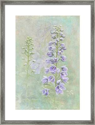 Delphinium Framed Print by Angie Vogel
